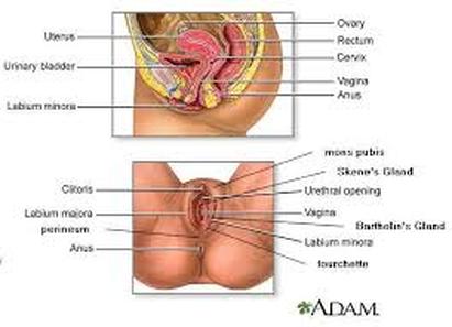 puto hardcore vagina